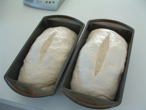 Stretch and fold loaves